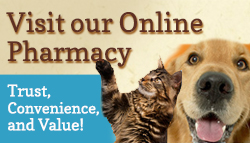 Kingsbury Animal Hospital - Visit our online store!
